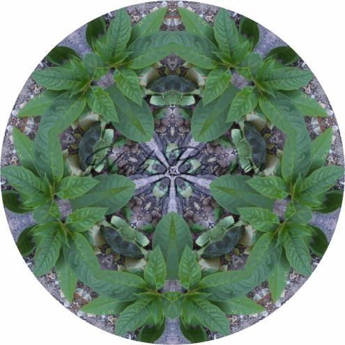just a weed mandala